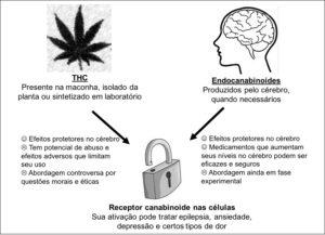 Fig. 2: Propriedades do THC, principal canabinoide produzido pela planta, e dos endocanabinoides, que são produzidos pelo corpo.
