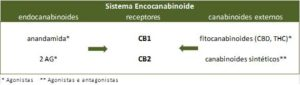 Sistema endocanabinoide esquema